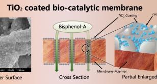 bioctaytic membrane